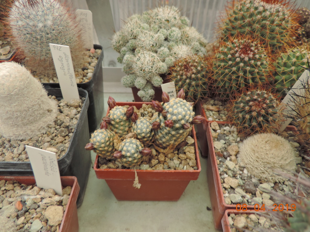 Cacti and Sukkulent in Köln, every day new flowers in the greenhouse Part 212 Bild2743