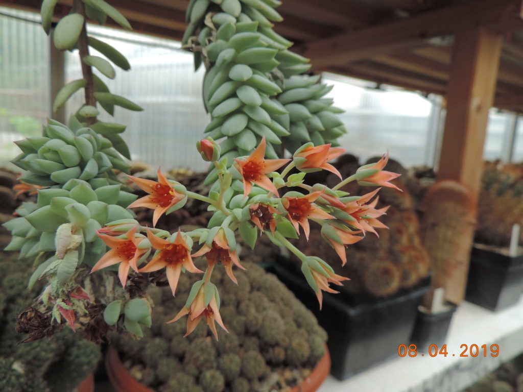 Cacti and Sukkulent in Köln, every day new flowers in the greenhouse Part 212 Bild2745