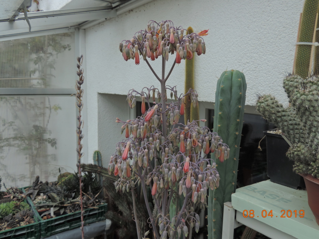 Cacti and Sukkulent in Köln, every day new flowers in the greenhouse Part 212 Bild2748