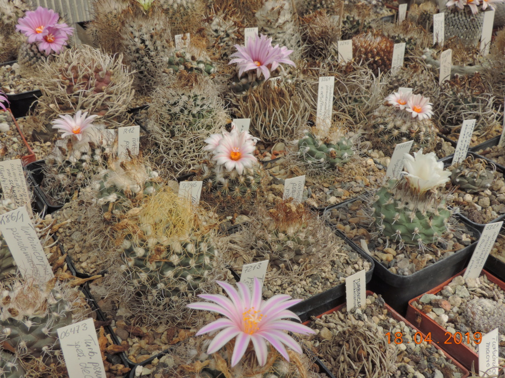 Cacti and Sukkulent in Köln, every day new flowers in the greenhouse Part 212 1/2 Bild2791