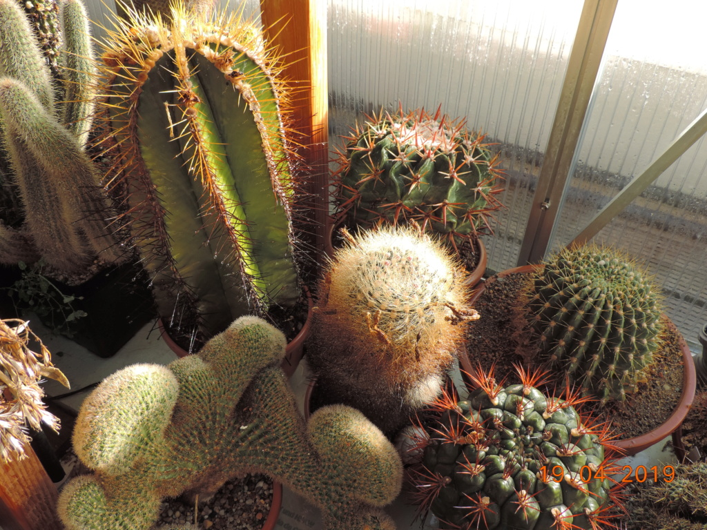 Cacti and Sukkulent in Köln, every day new flowers in the greenhouse Part 212 1/2 Bild2811