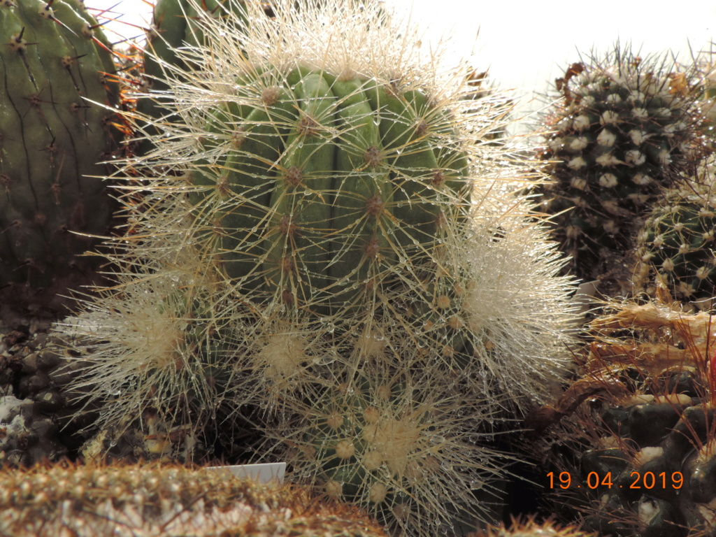 Cacti and Sukkulent in Köln, every day new flowers in the greenhouse Part 212 1/2 Bild2812