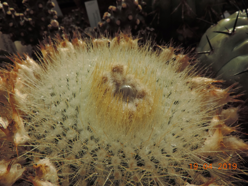 Cacti and Sukkulent in Köln, every day new flowers in the greenhouse Part 212 1/2 Bild2813