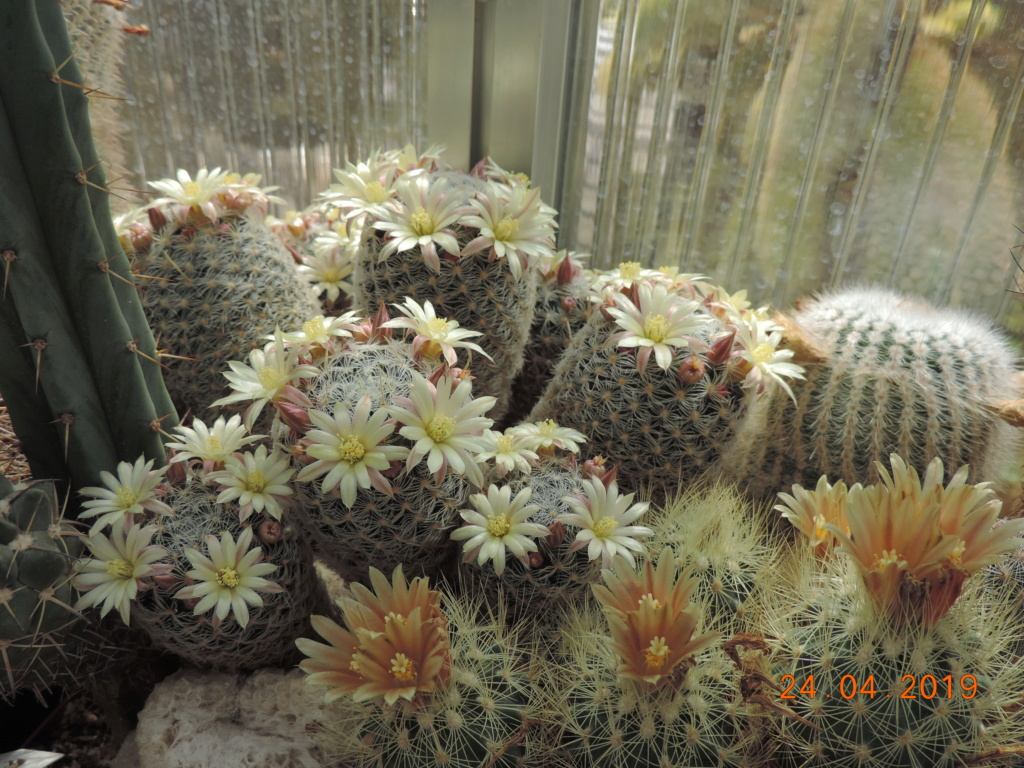 Cacti and Sukkulent in Köln, every day new flowers in the greenhouse Part 212 1/2 Bild2873
