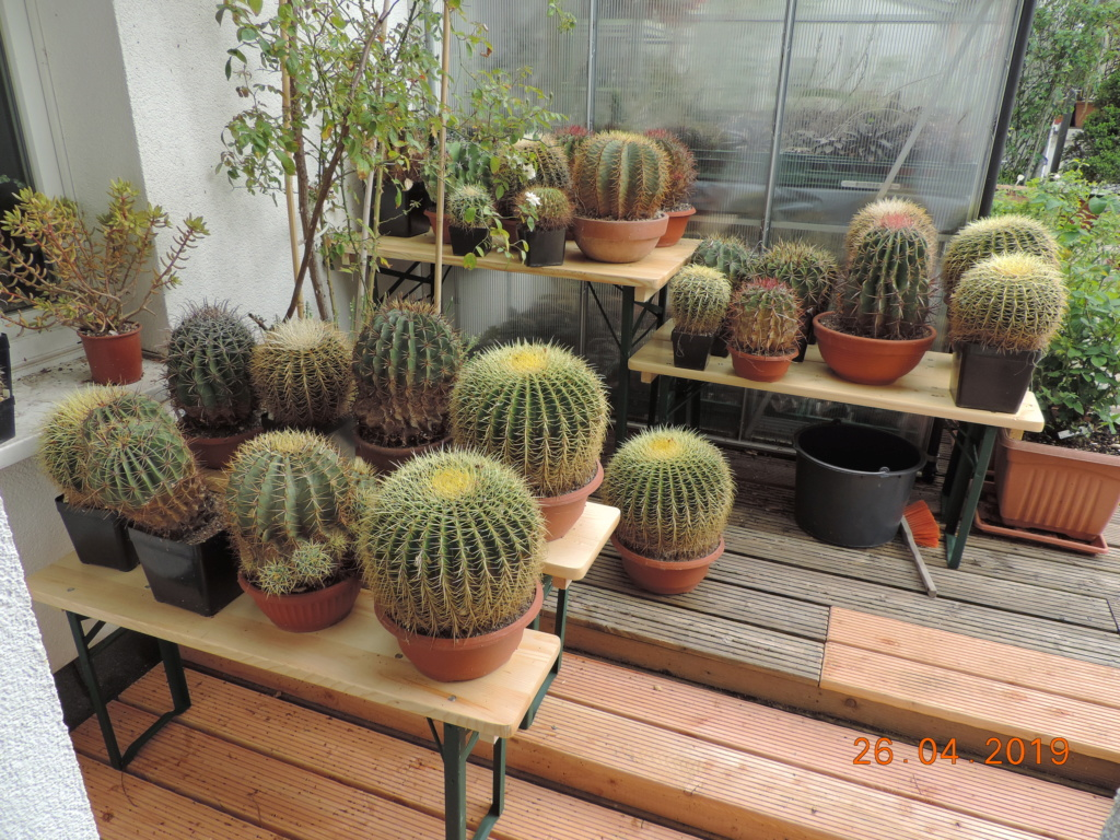 Cacti and Sukkulent in Köln, every day new flowers in the greenhouse Part 214 Bild2911