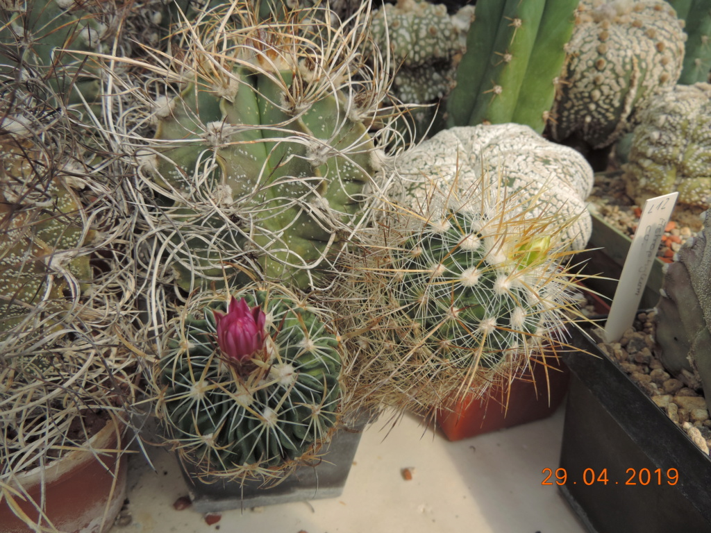 Cacti and Sukkulent in Köln, every day new flowers in the greenhouse Part 214 Bild2924