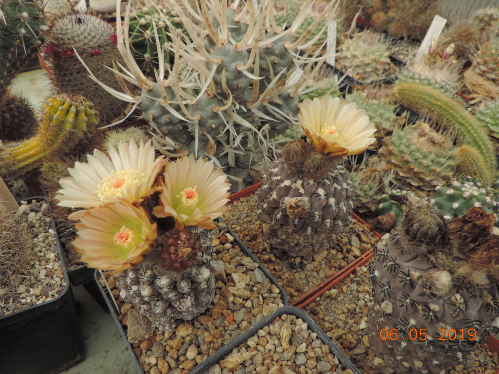 Cacti and Sukkulent in Köln, every day new flowers in the greenhouse Part 214 Bild2983