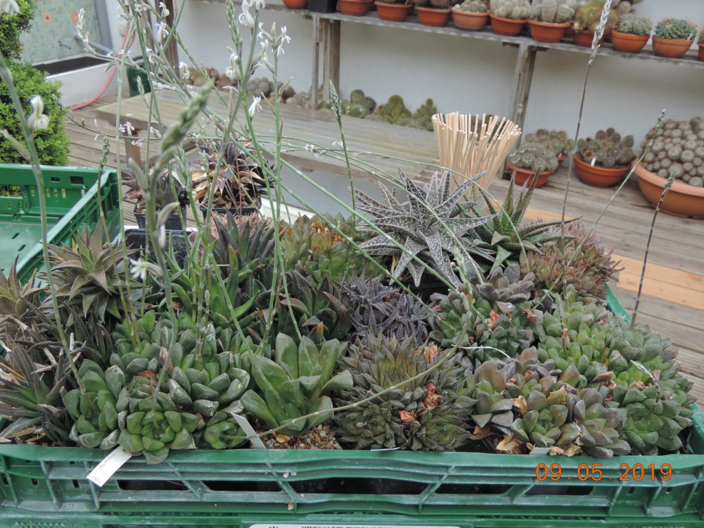 Cacti and Sukkulent in Köln, every day new flowers in the greenhouse Part 214 Bild2998