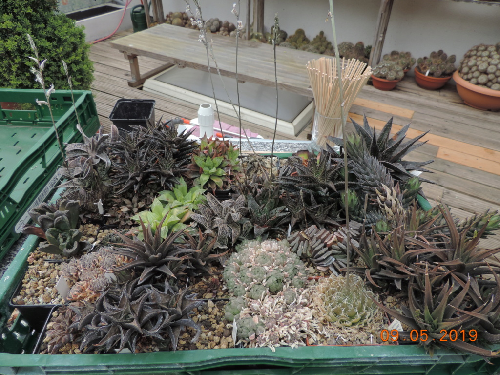 Cacti and Sukkulent in Köln, every day new flowers in the greenhouse Part 214 Bild3000