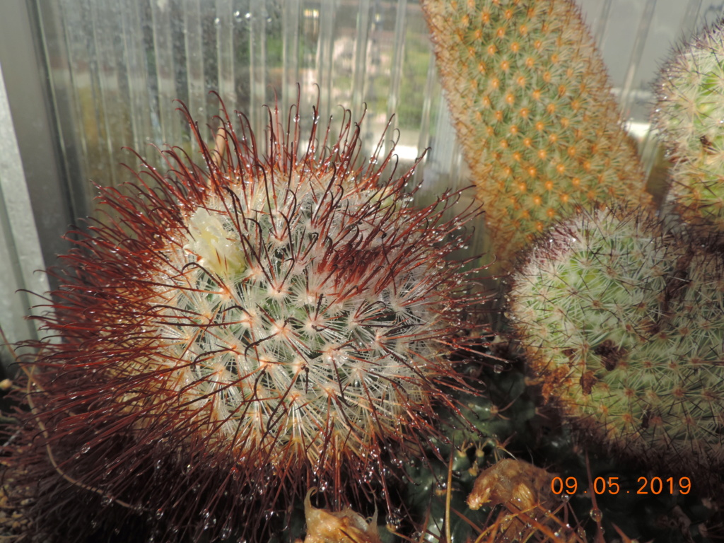 Cacti and Sukkulent in Köln, every day new flowers in the greenhouse Part 214 Bild3009