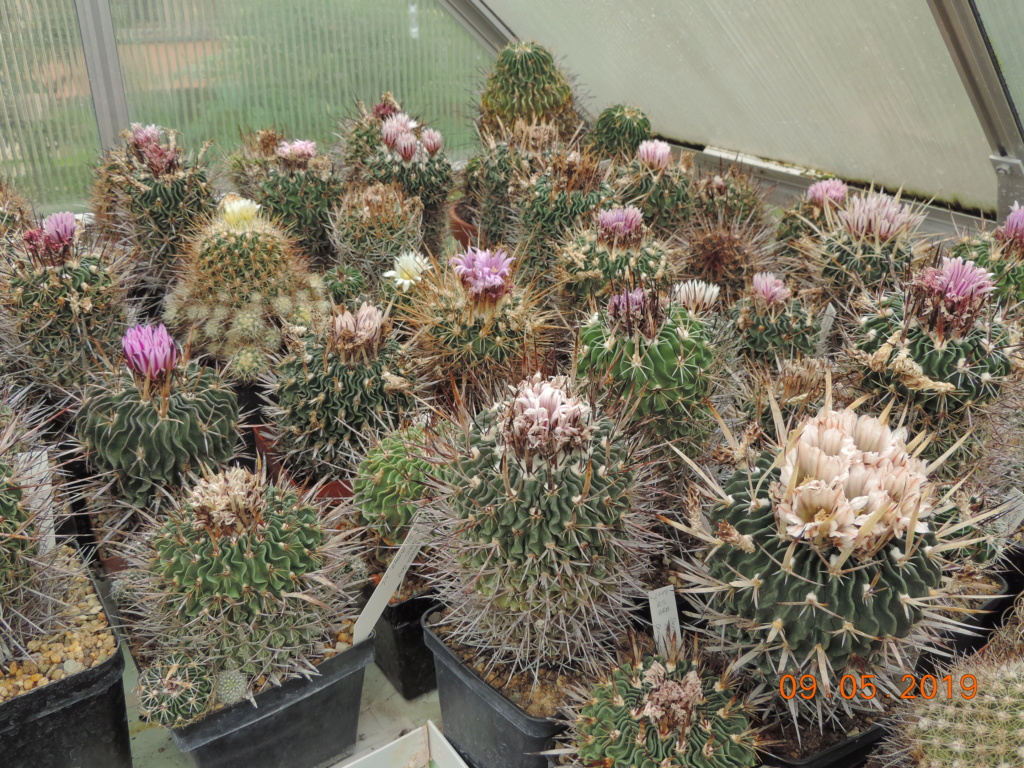 Cacti and Sukkulent in Köln, every day new flowers in the greenhouse Part 214 Bild3036
