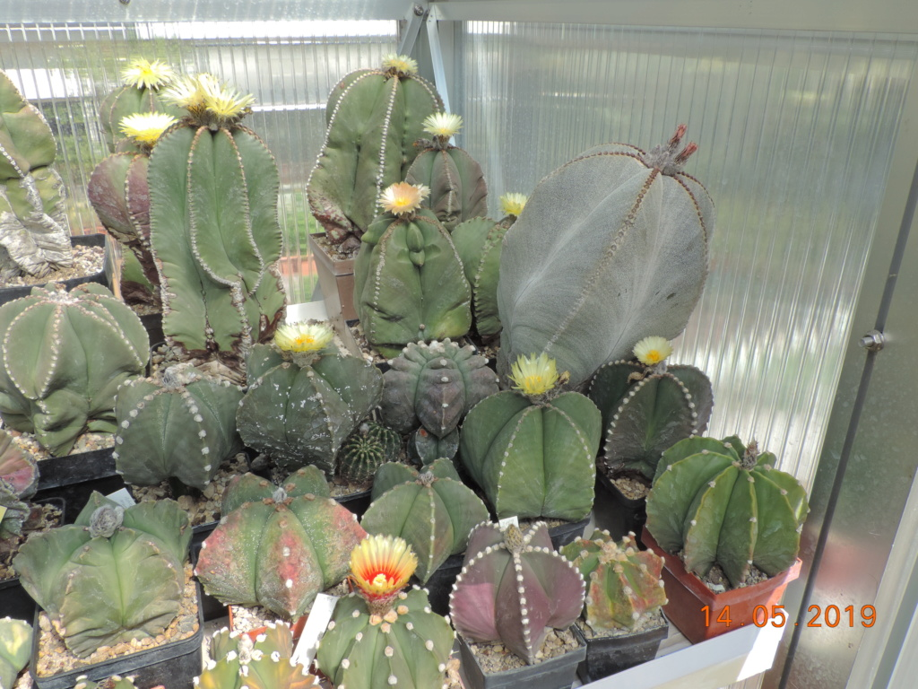 Cacti and Sukkulent in Köln, every day new flowers in the greenhouse Part 215 Bild3067