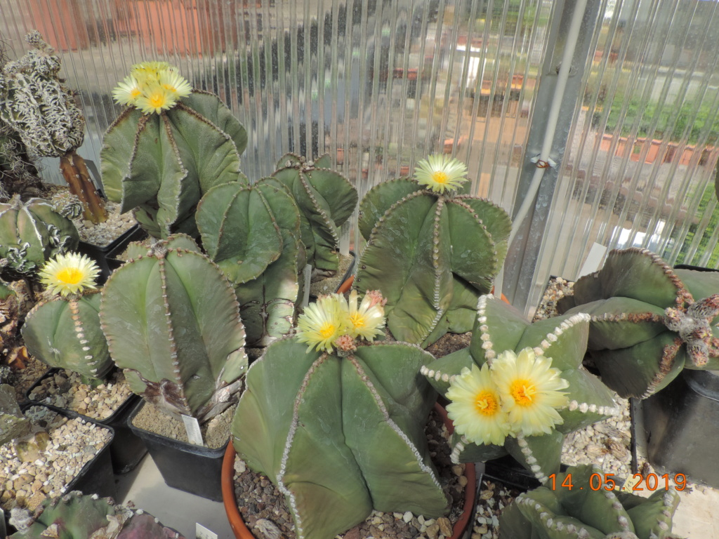 Cacti and Sukkulent in Köln, every day new flowers in the greenhouse Part 215 Bild3069