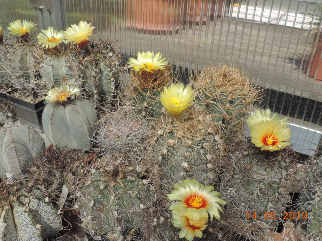 Cacti and Sukkulent in Köln, every day new flowers in the greenhouse Part 215 Bild3073