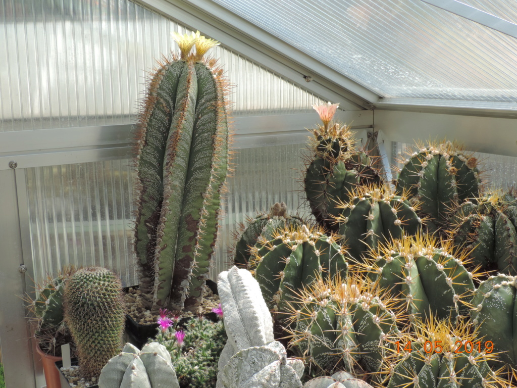 Cacti and Sukkulent in Köln, every day new flowers in the greenhouse Part 215 Bild3091