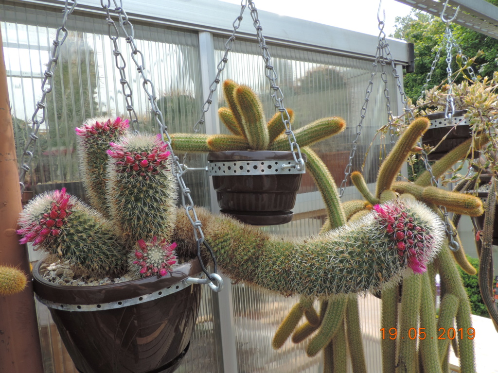 Cacti and Sukkulent in Köln, every day new flowers in the greenhouse Part 215 Bild3142