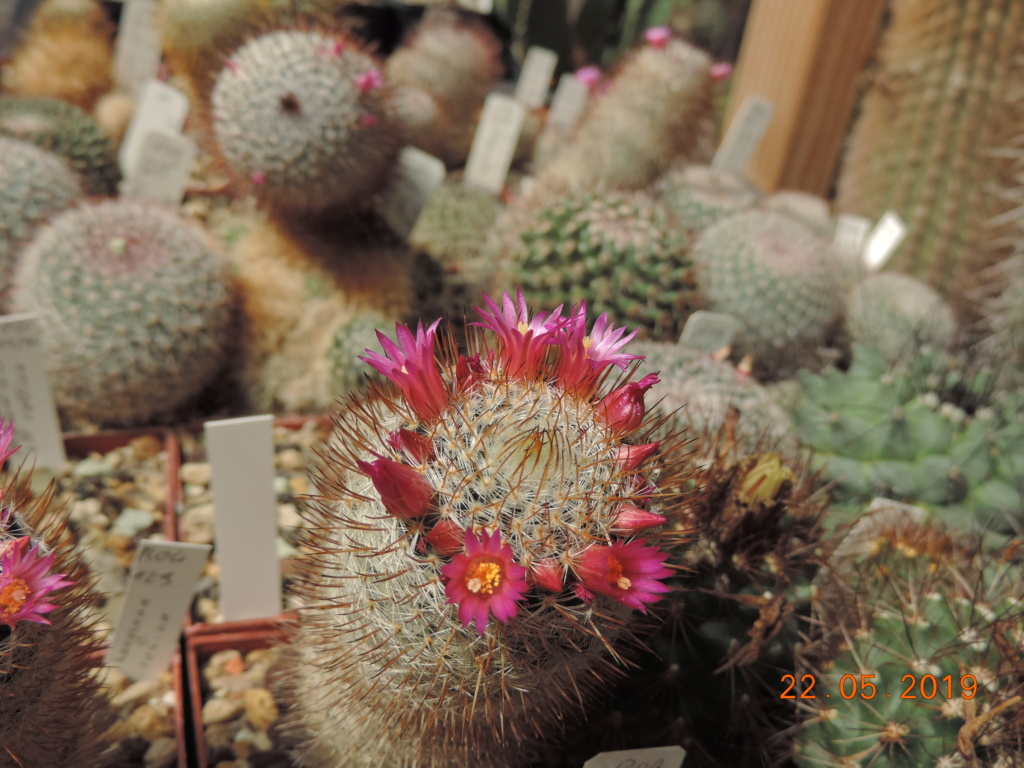 Cacti and Sukkulent in Köln, every day new flowers in the greenhouse Part 216 Bild3176