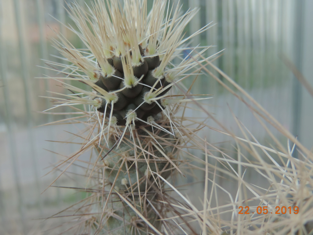 Cacti and Sukkulent in Köln, every day new flowers in the greenhouse Part 216 Bild3189