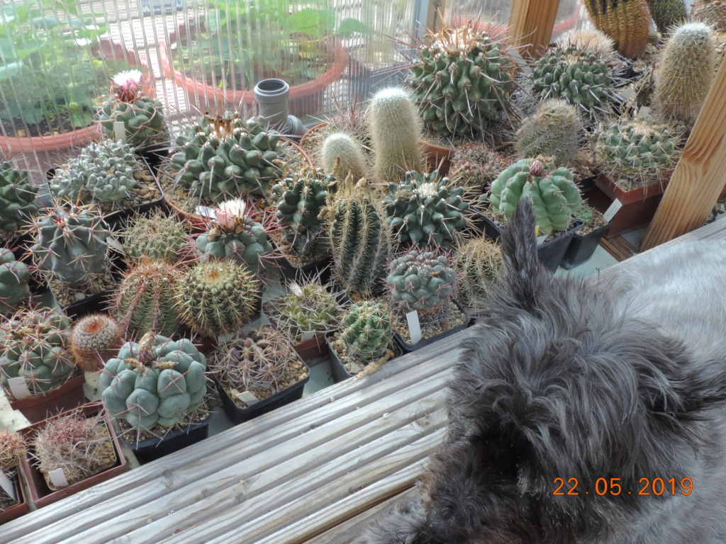Cacti and Sukkulent in Köln, every day new flowers in the greenhouse Part 216 Bild3200