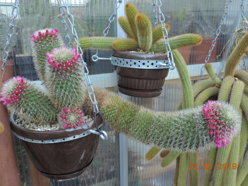 Cacti and Sukkulent in Köln, every day new flowers in the greenhouse Part 216 Bild3203