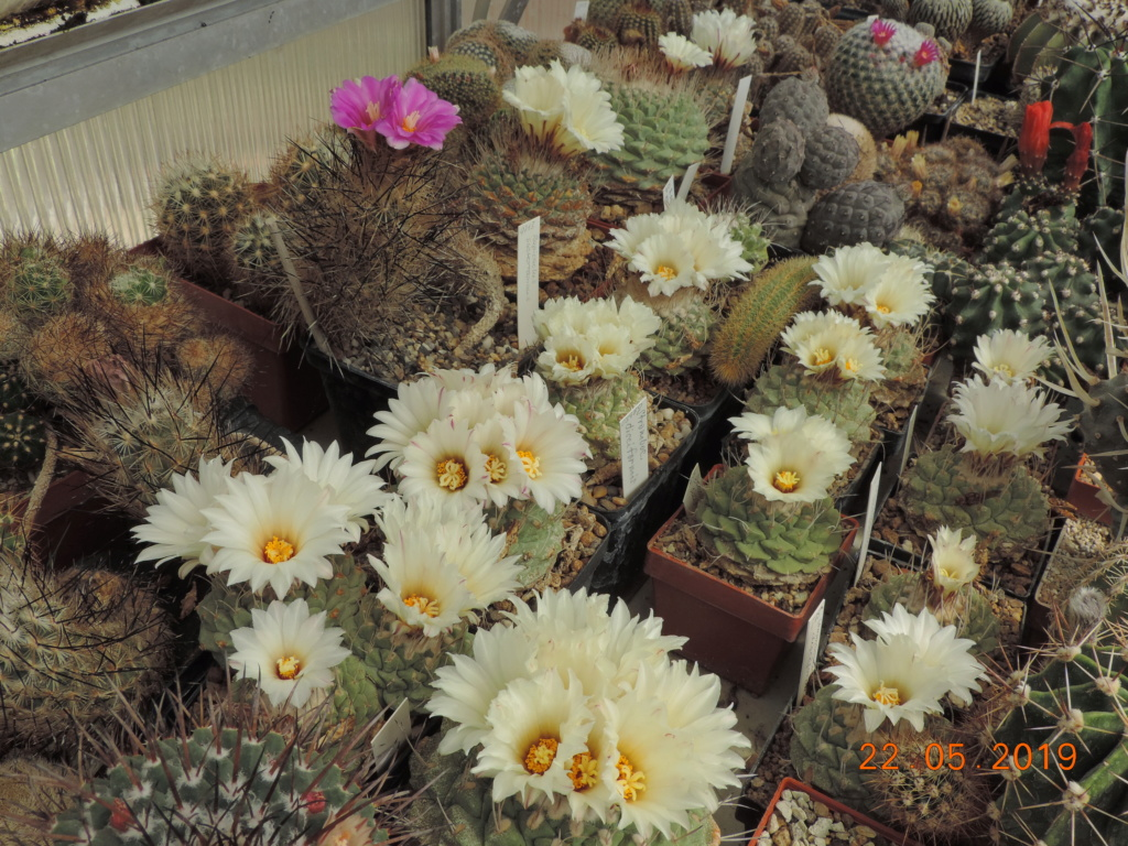 Cacti and Sukkulent in Köln, every day new flowers in the greenhouse Part 216 Bild3215
