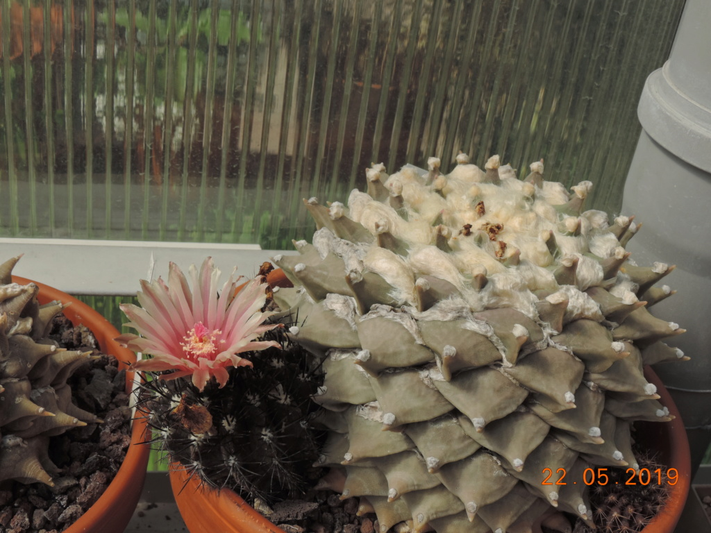 Cacti and Sukkulent in Köln, every day new flowers in the greenhouse Part 216 Bild3221