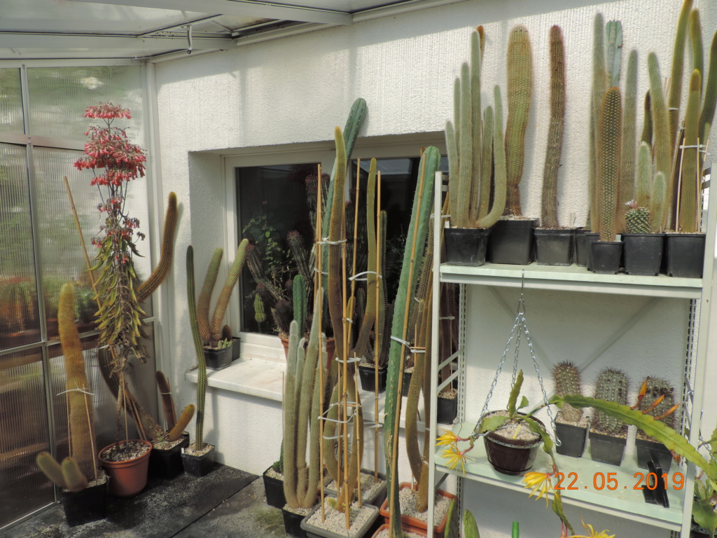 Cacti and Sukkulent in Köln, every day new flowers in the greenhouse Part 216 Bild3224