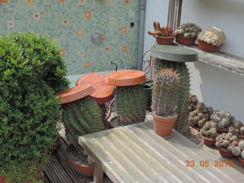Cacti and Sukkulent in Köln, every day new flowers in the greenhouse Part 216 Bild3227
