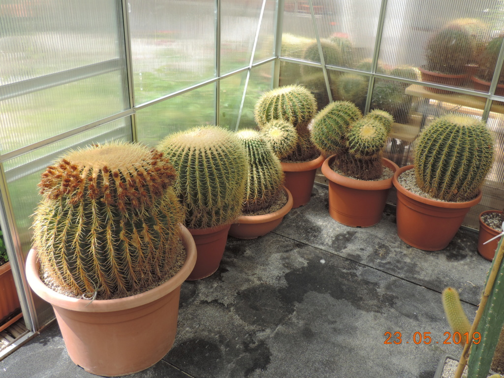 Cacti and Sukkulent in Köln, every day new flowers in the greenhouse Part 216 Bild3228