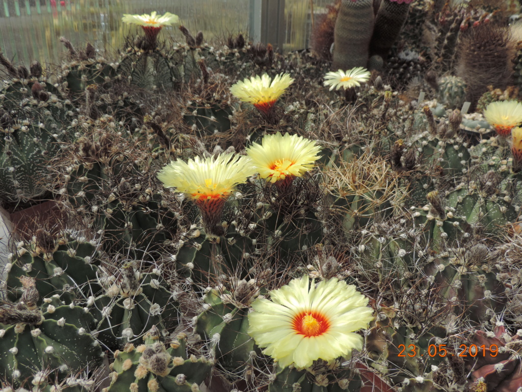 Cacti and Sukkulent in Köln, every day new flowers in the greenhouse Part 216 Bild3229