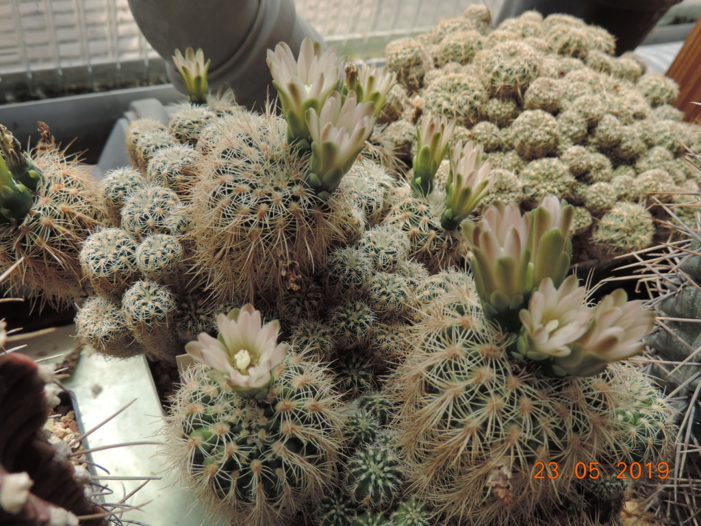 Cacti and Sukkulent in Köln, every day new flowers in the greenhouse Part 216 Bild3242