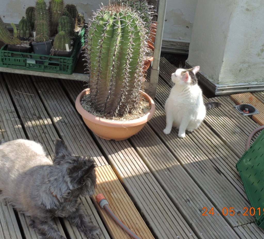 Cacti and Sukkulent in Köln, every day new flowers in the greenhouse Part 216 Bild3264