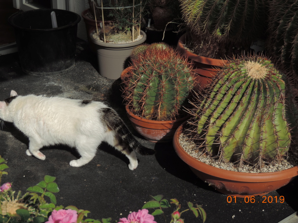 Cacti and Sukkulent in Köln, every day new flowers in the greenhouse Part 216 Bild3280