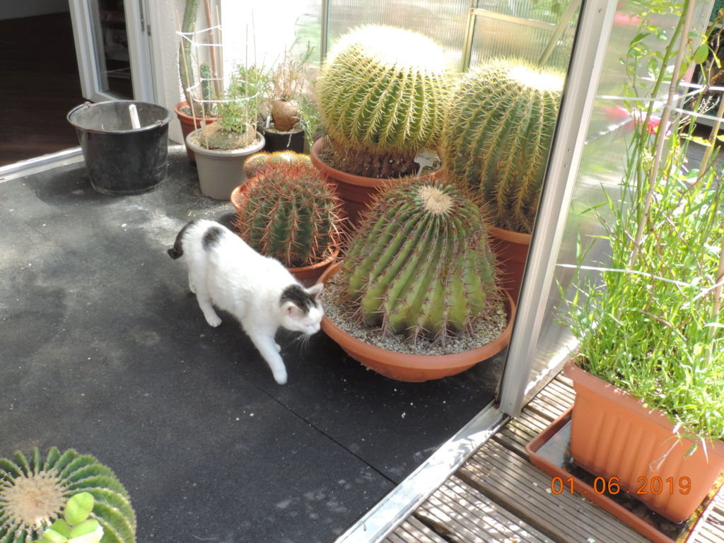 Cacti and Sukkulent in Köln, every day new flowers in the greenhouse Part 216 Bild3282