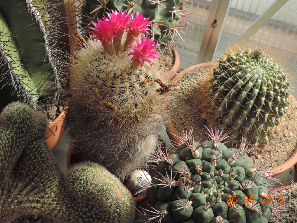 Cacti and Sukkulent in Köln, every day new flowers in the greenhouse Part 216 Bild3301