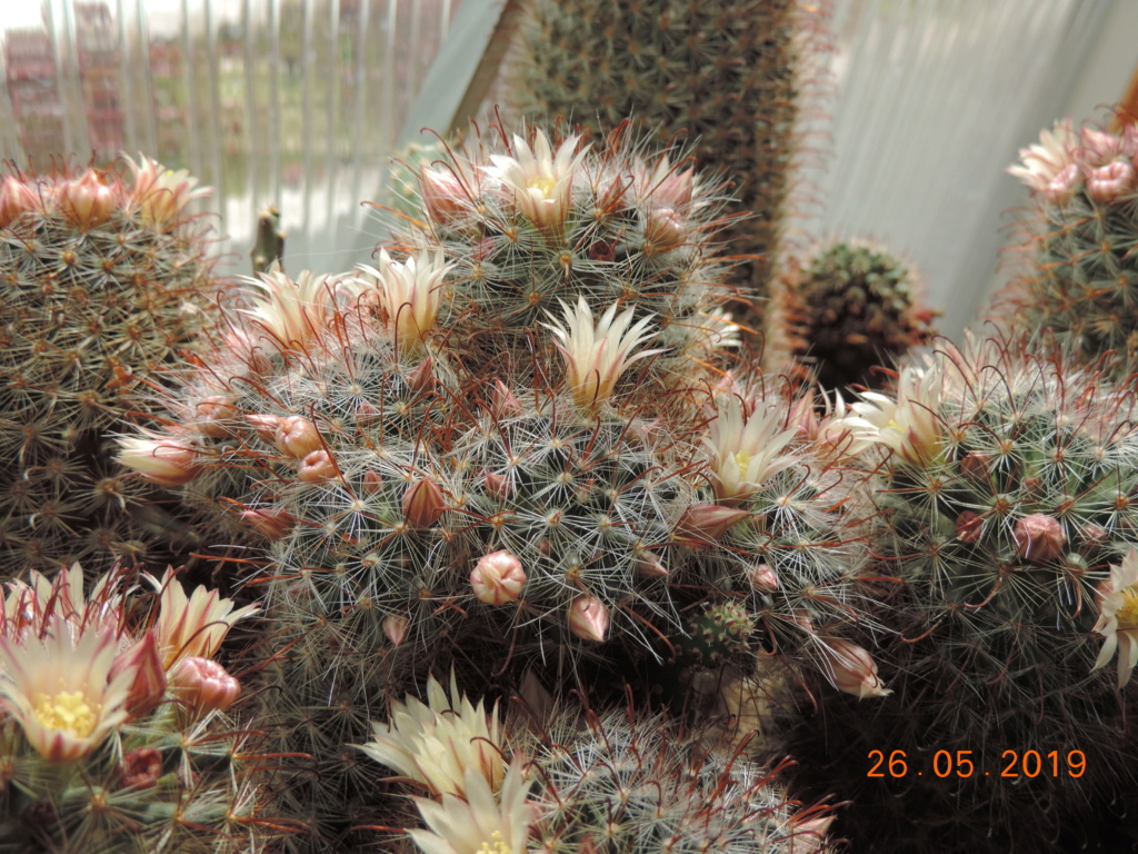 Cacti and Sukkulent in Köln, every day new flowers in the greenhouse Part 216 Bild3311