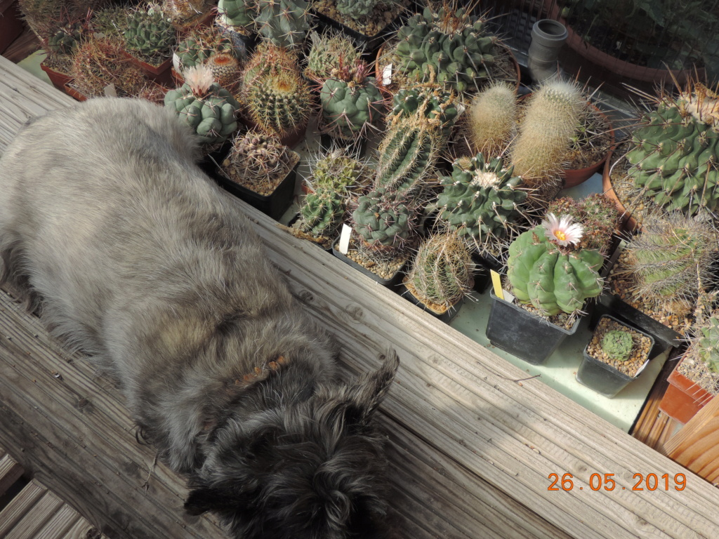 Cacti and Sukkulent in Köln, every day new flowers in the greenhouse Part 216 Bild3320