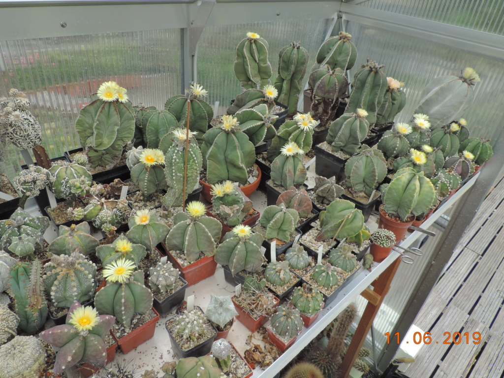 Cacti and Sukkulent in Köln, every day new flowers in the greenhouse Part 217 Bild3334
