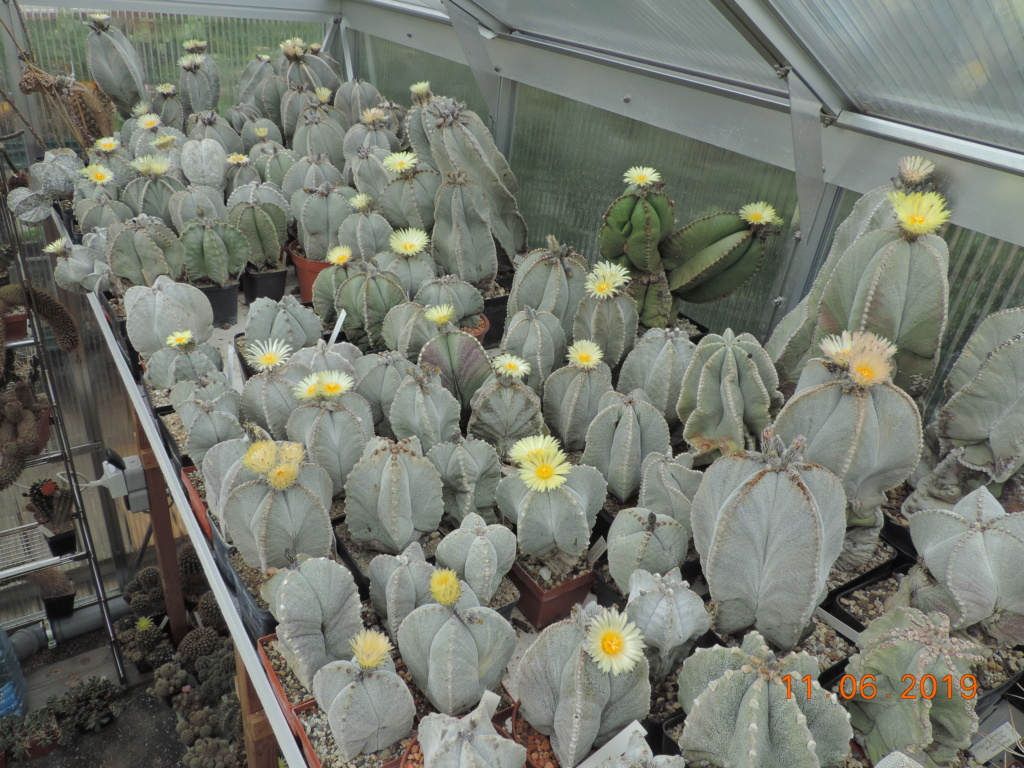 Cacti and Sukkulent in Köln, every day new flowers in the greenhouse Part 217 Bild3335