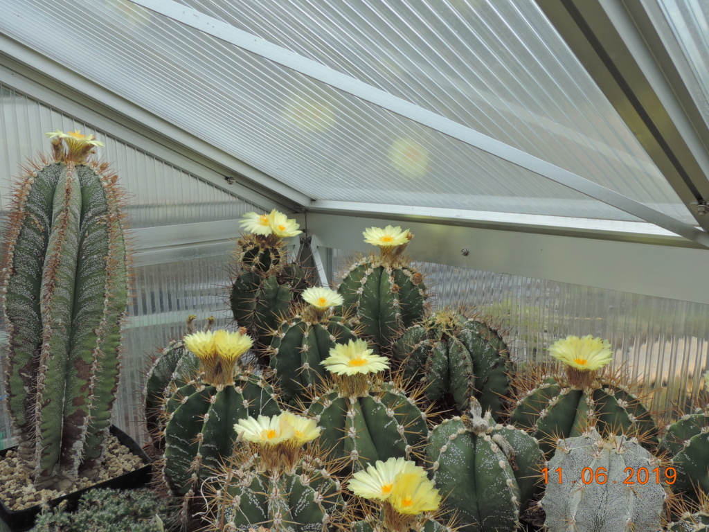 Cacti and Sukkulent in Köln, every day new flowers in the greenhouse Part 217 Bild3338