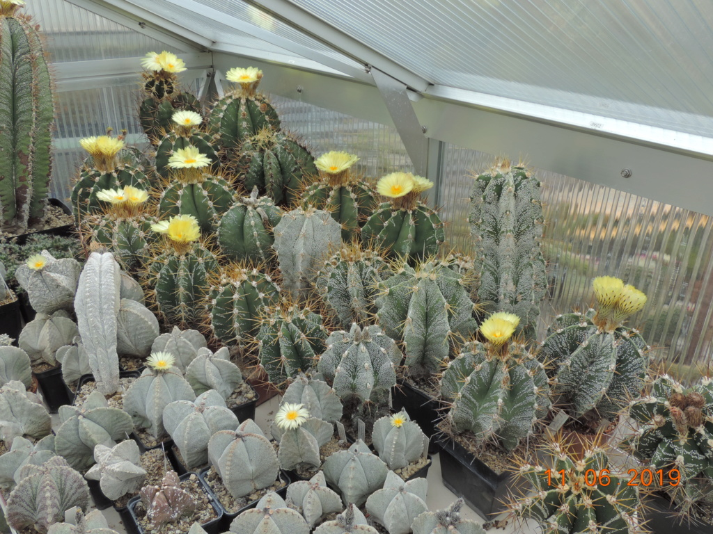 Cacti and Sukkulent in Köln, every day new flowers in the greenhouse Part 217 Bild3339