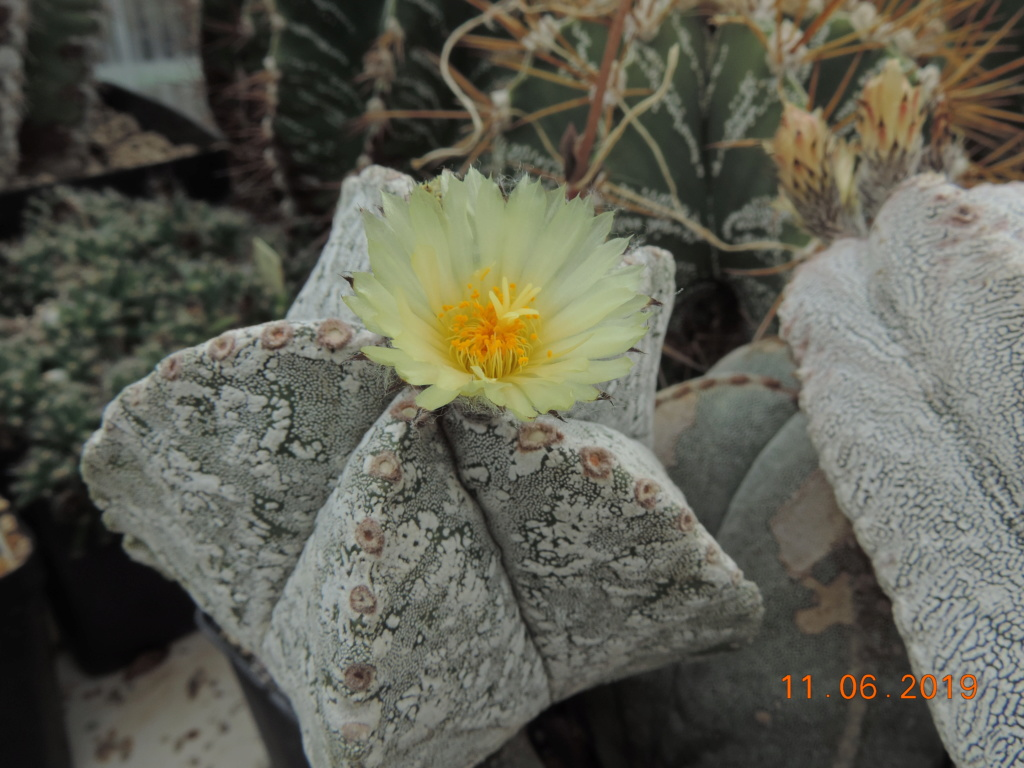 Cacti and Sukkulent in Köln, every day new flowers in the greenhouse Part 217 Bild3340