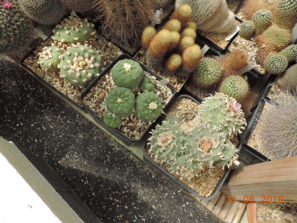 Cacti and Sukkulent in Köln, every day new flowers in the greenhouse Part 217 Bild3359