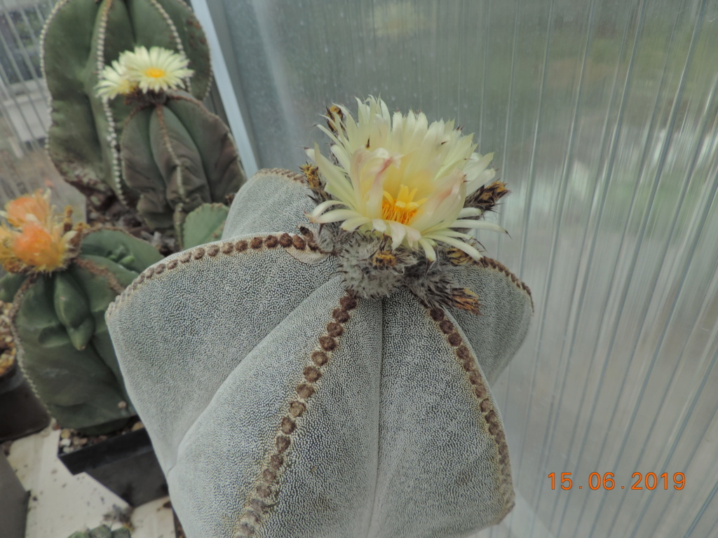 Cacti and Sukkulent in Köln, every day new flowers in the greenhouse Part 217 Bild3373