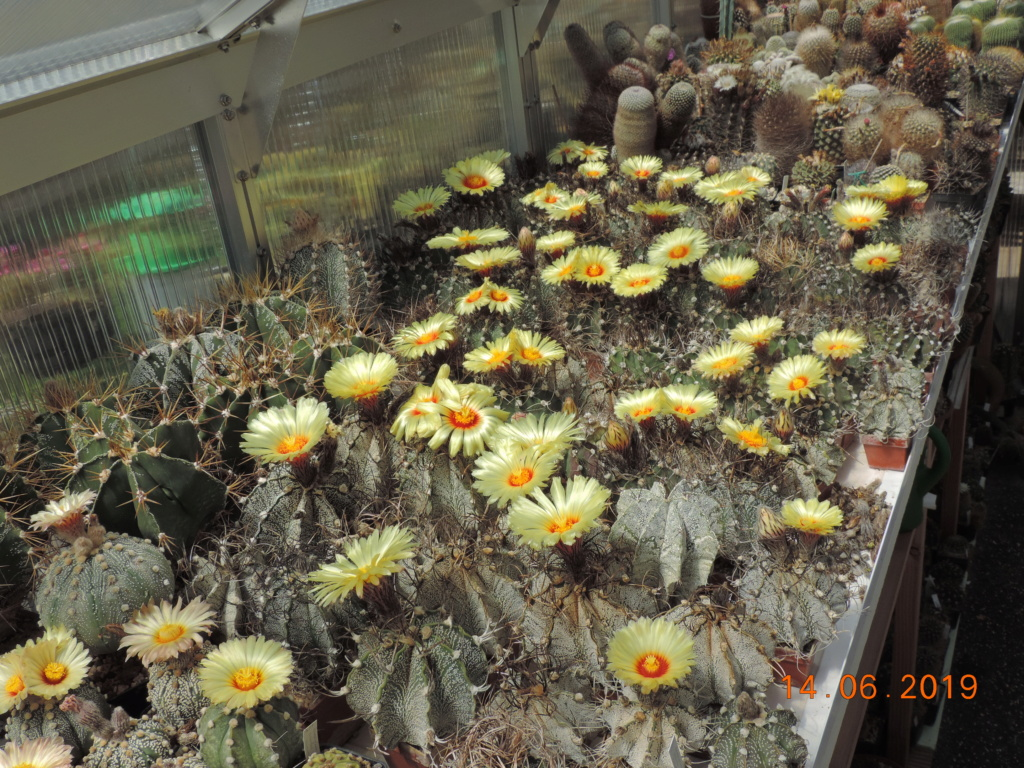 Cacti and Sukkulent in Köln, every day new flowers in the greenhouse Part 217 Bild3383