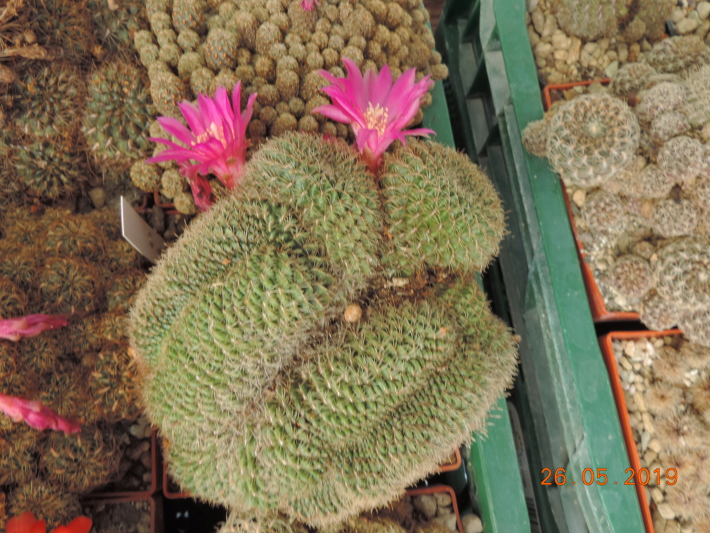 Cacti and Sukkulent in Köln, every day new flowers in the greenhouse Part 217 Bild3407