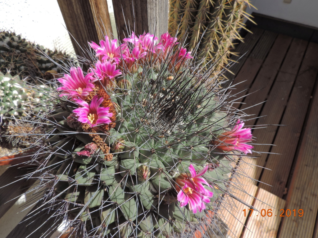 Cacti and Sukkulent in Köln, every day new flowers in the greenhouse Part 217 Bild3410