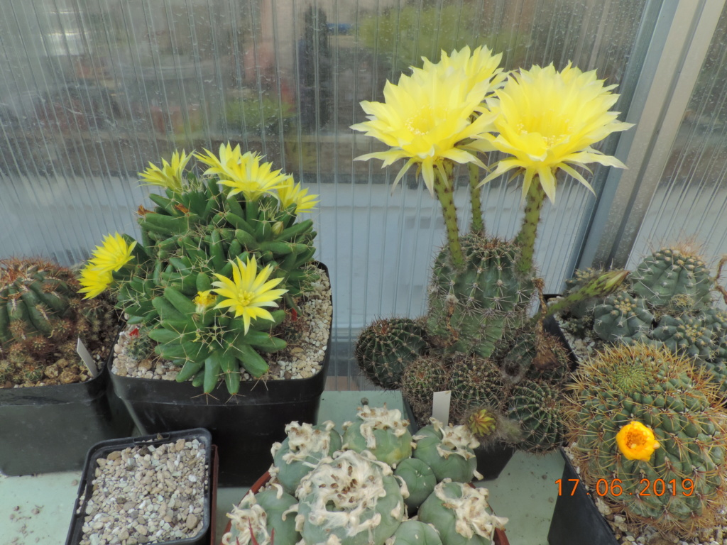 Cacti and Sukkulent in Köln, every day new flowers in the greenhouse Part 217 Bild3416