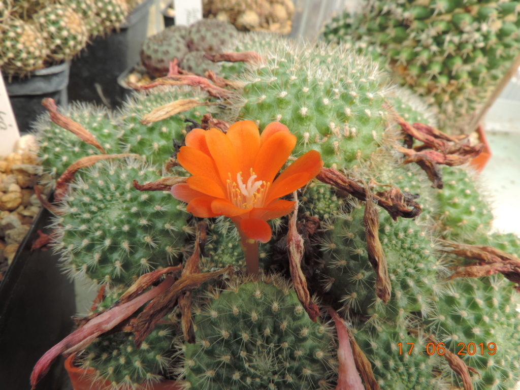 Cacti and Sukkulent in Köln, every day new flowers in the greenhouse Part 217 Bild3417