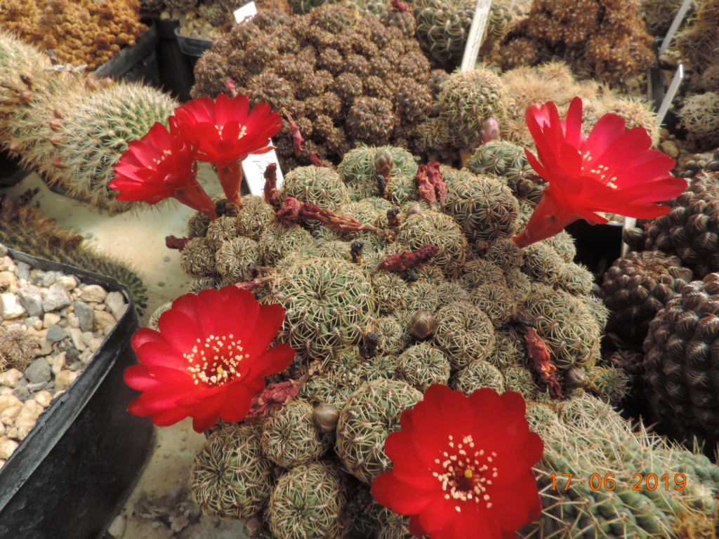 Cacti and Sukkulent in Köln, every day new flowers in the greenhouse Part 217 Bild3422